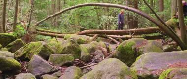 Ausflugsziele Bayerischer Wald Oberpfalz Höllbachtal Wandergebiet
